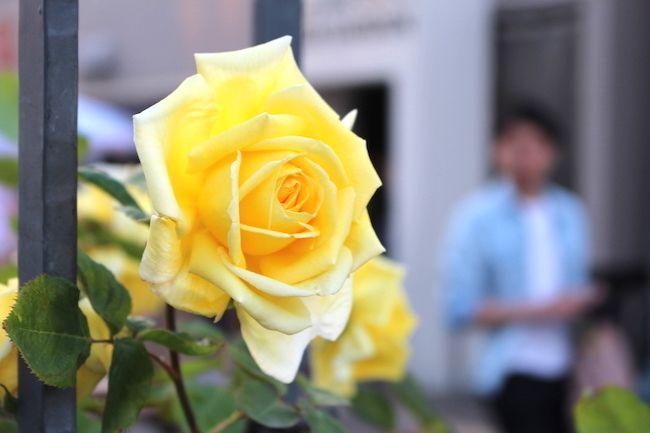 これは…花!