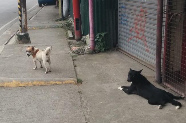 セブ島に住む野良犬。日本じゃまず見かけない光景。