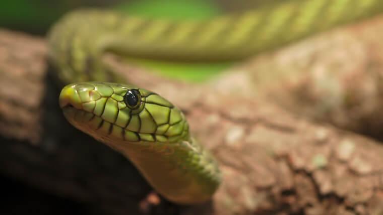 パイソン(Python)